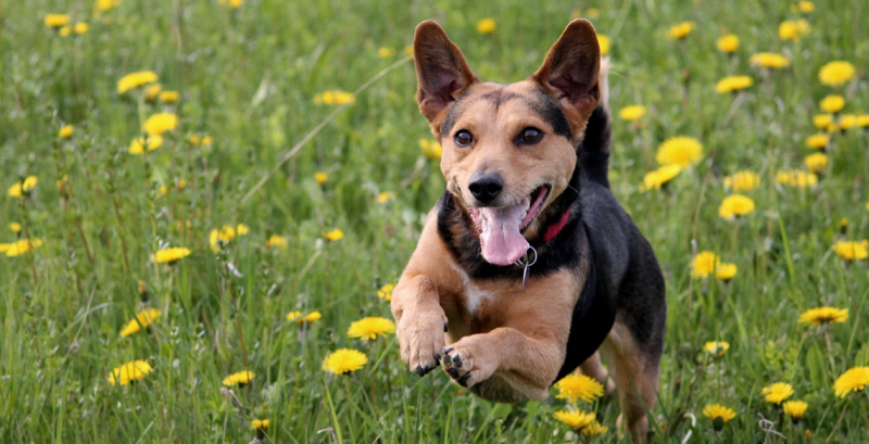 featured-dog-come-recall.png